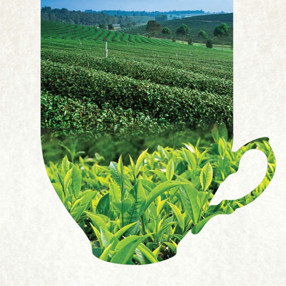 https://wysiwyg.co.in/sites/default/files/worksThumb/Teloijan-2015-tea-brochure-corporate-profile-a4-03_0.jpg